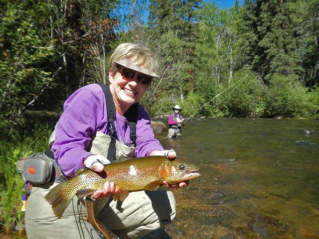 Virginia's nice rainbow trout
