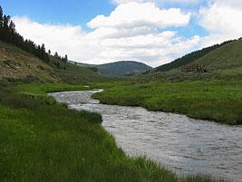 Pristine Trout Rivers