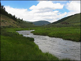 Pristine Trout Rivers