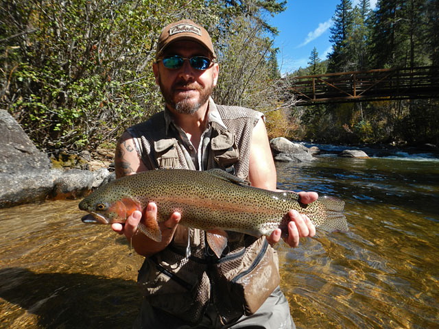 Rob's big rainbow trout
