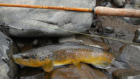 Fly Fishing Small Creeks